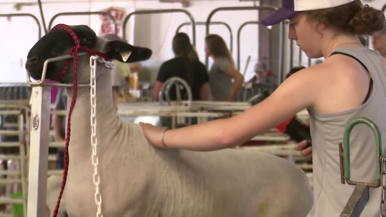 Cascade County 4-H livestock show still on for July