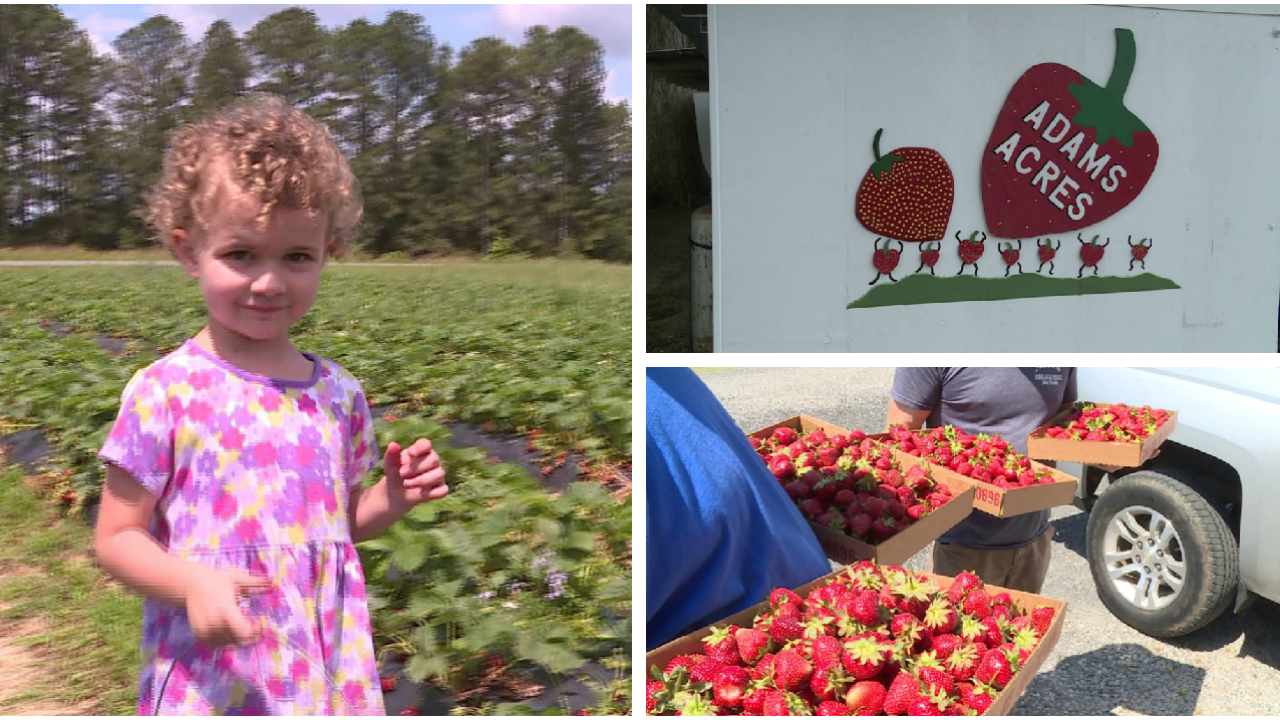 How this strawberry empire in Dinwiddie keeps smiles on customers' faces