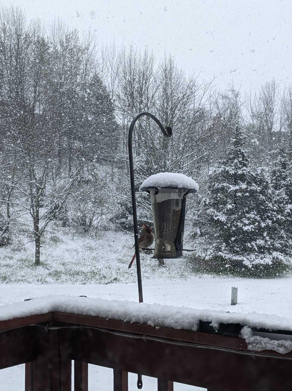 West Bend snow Carly B. .jpeg