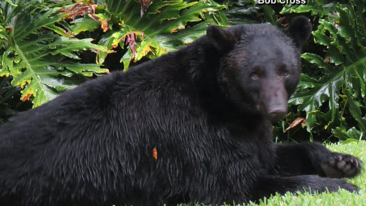 Webinars to discuss bear management in Florida