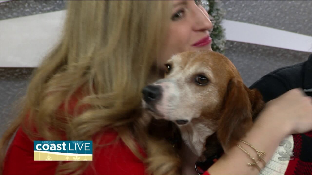 Keeping pets safe and giving them a home for the holidays on CoastLive