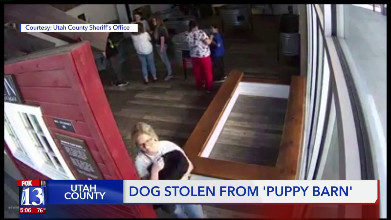 Security video shows woman who stole a 'goldendoodle' from the Puppy Barn inVineyard