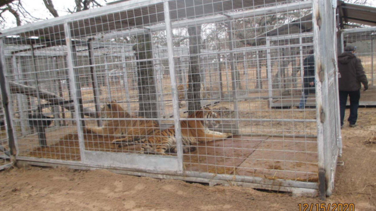 USDA inspection photo tigers.PNG
