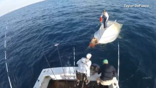 WPTV-capsized-boat-rescue-021619.jpg