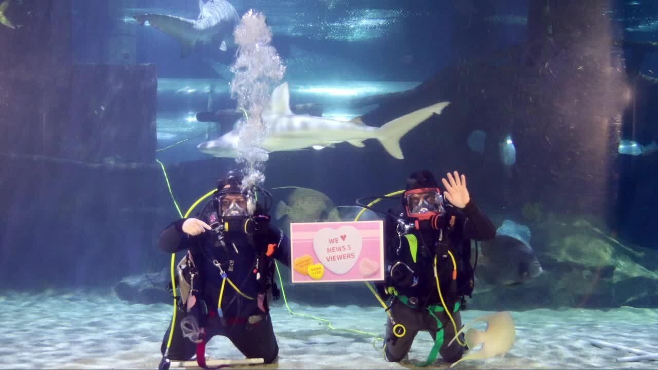 Aquarium scuba divers