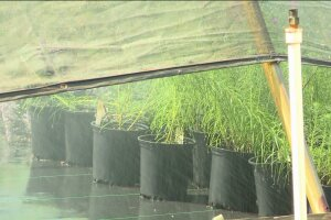Colesville Nursery offers Fall gardeningtips