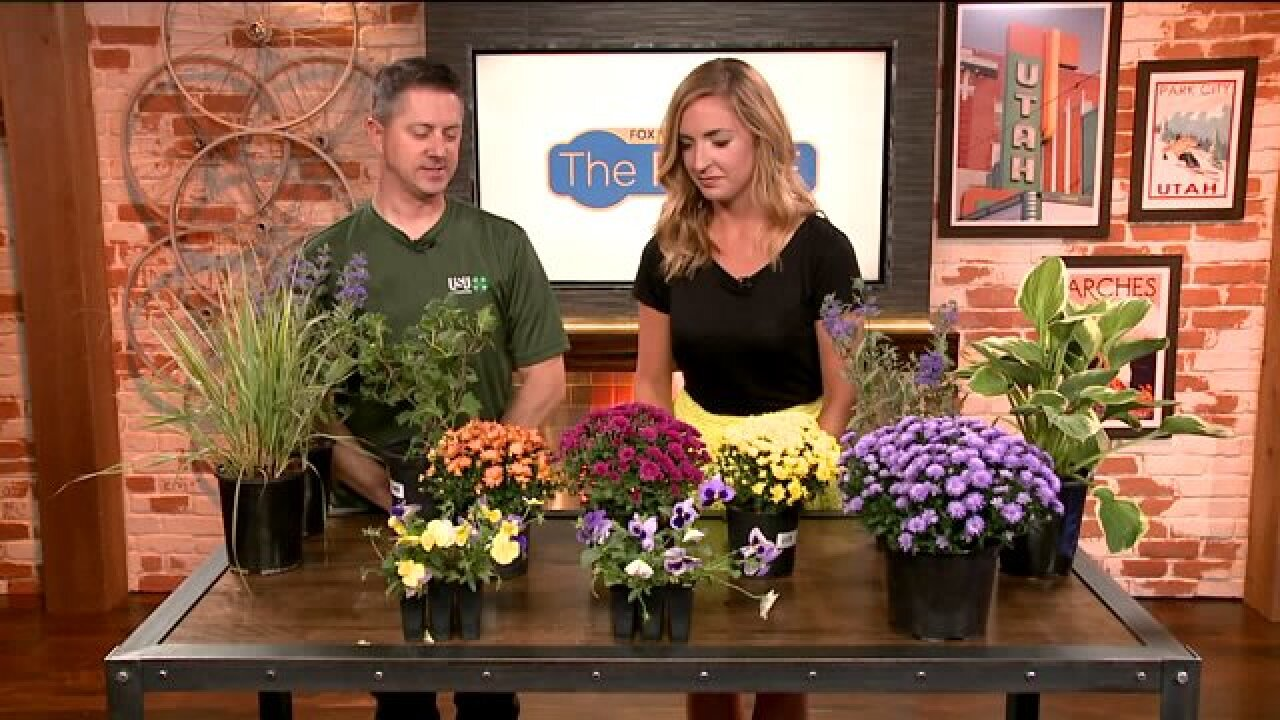 Now is the time to start your Fall planting