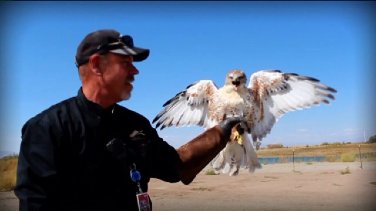 Meet the team working to prevent bird strikes at the SLC International Airport