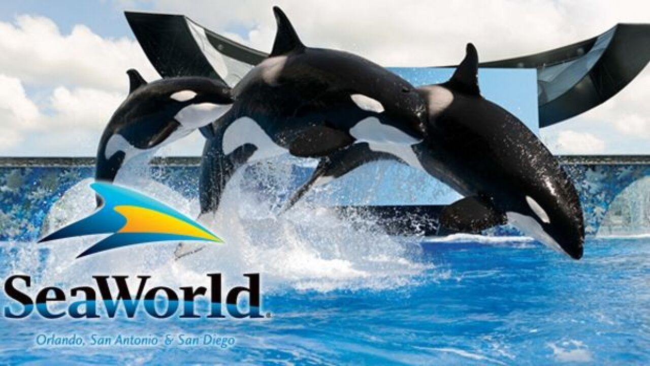 SeaWorld lays off undisclosed number of employees