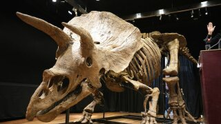 France Triceratops