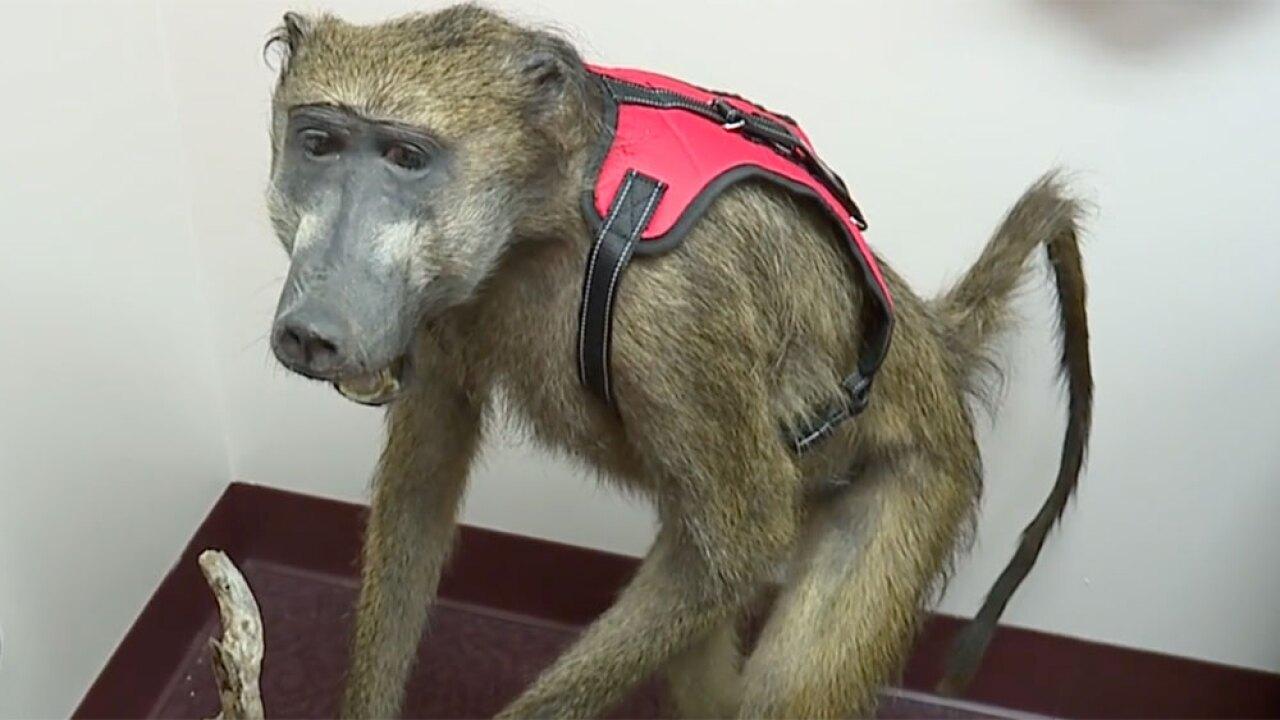 wptv-emotional-support-animal-abuse-.jpg