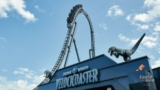 Thrill-seekers will have the opportunity to soar 155 feet in the air and catapult up to 70 mph alongside a ferocious Velociraptor pack as they experience Florida's fastest and tallest launch coaster.