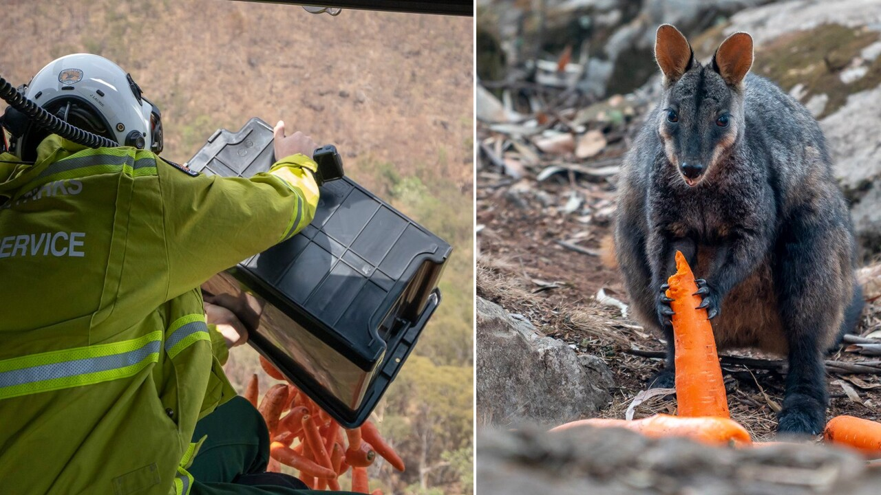 Officials in Australia loaded bins of carrots and sweet potatoes into a chopper and dropped them by air to provide food for animals impacted by recent bushfires.