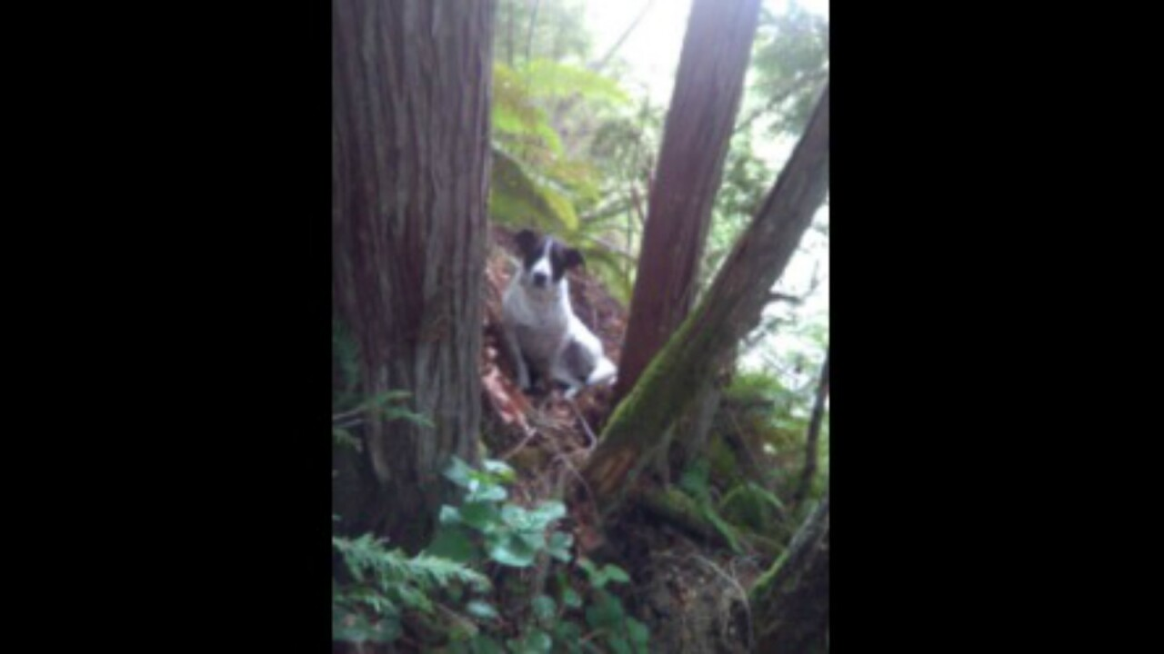 Dog waits with Washington man's body after he dies while hiking