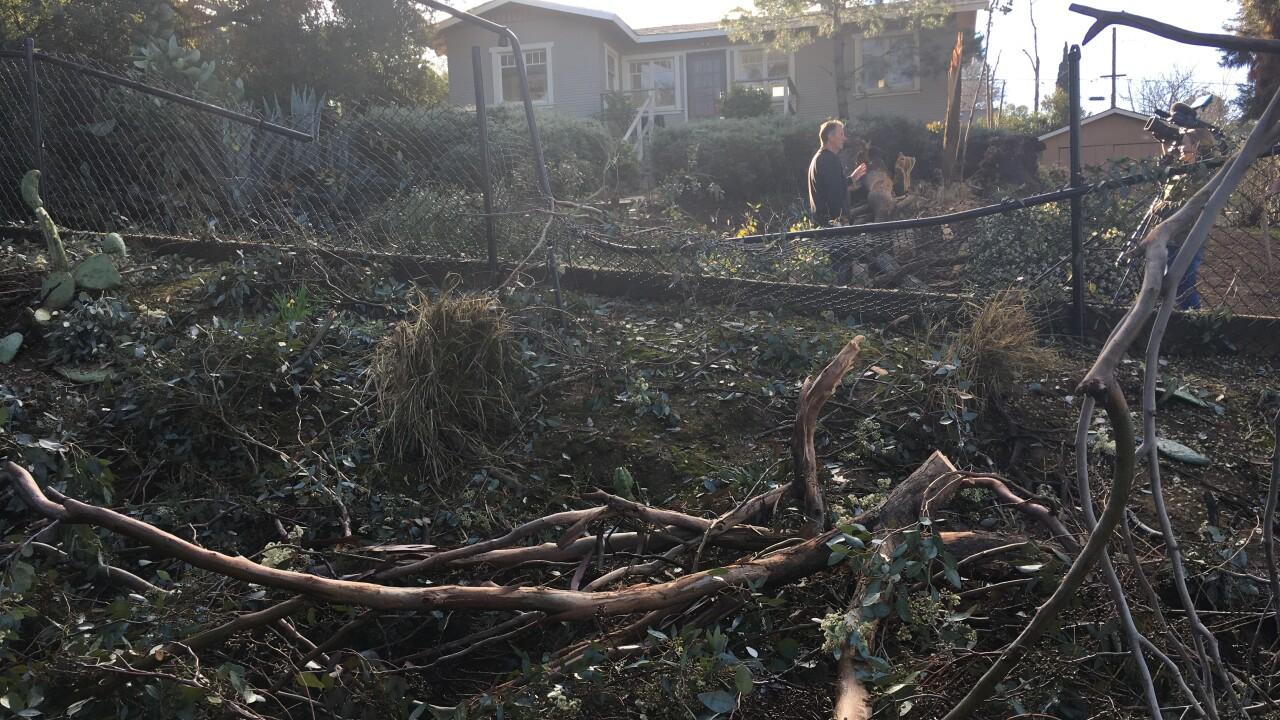 Tree Falls Near Homes In Escondido