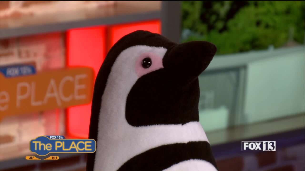 3 Ways to Celebrate Penguin Awareness Day