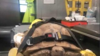 Tortoise found wandering El Cajon sidewalks