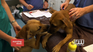 Paws & Claws: Nearly 100 Dogs and Cats Rescued from Puerto Rico