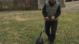 Making A Difference: Man Spends Retirement Walking Shelter Dogs