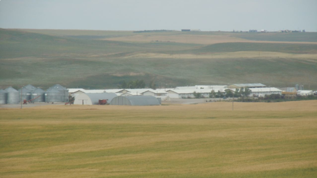 New study highlights the role of Hutterite colonies in Montana's economy