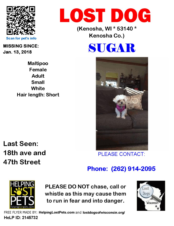 0113 Sugar Maltipoo Adult.png