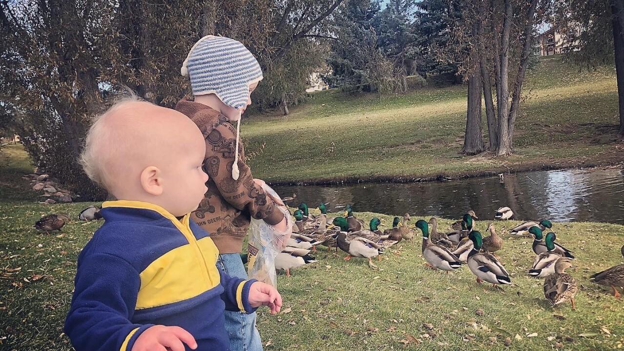 The boys and ducks