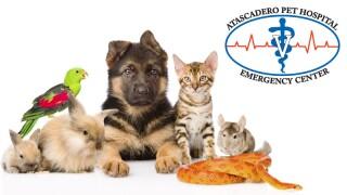 Atascadero Pet Hospital