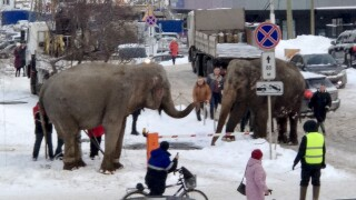 Russia Elephant Escape