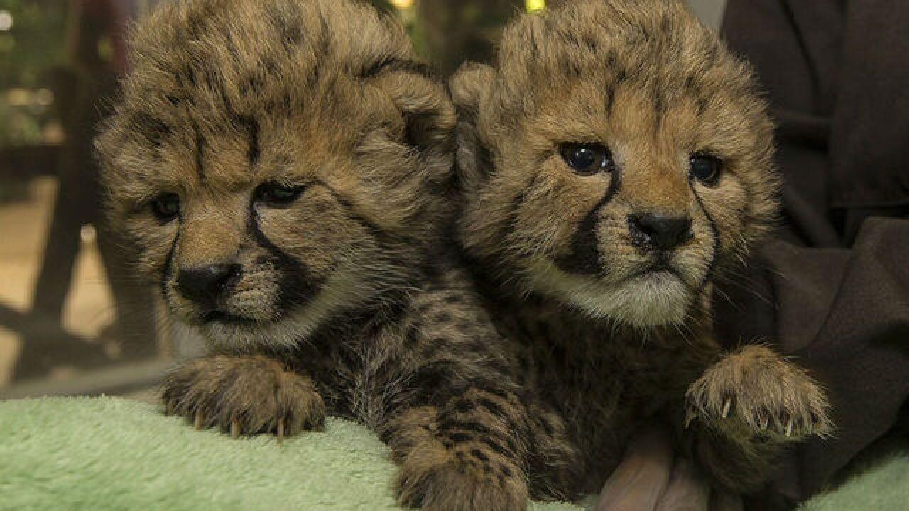 San Diego Zoo Safari Park welcomes firefighters and families for free
