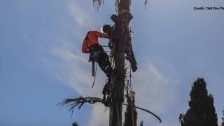 escondido palm tree rescue_1.jpg