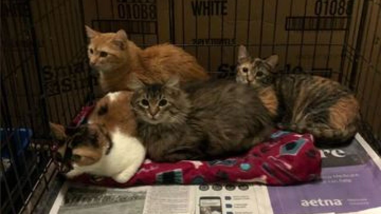 43 cats found in U-Haul truck in Indiana