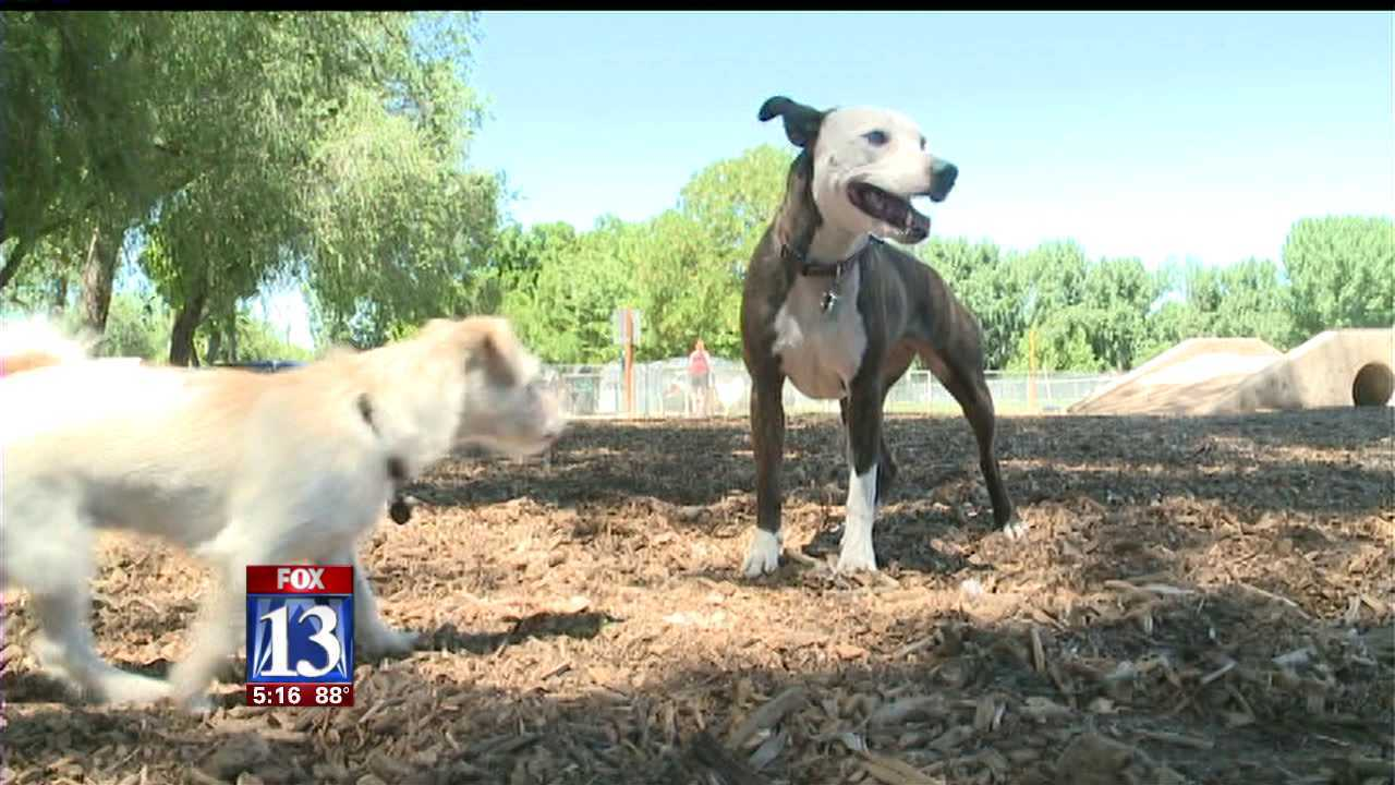 License fee proposed for expanding off-leash dog park areas in SLC