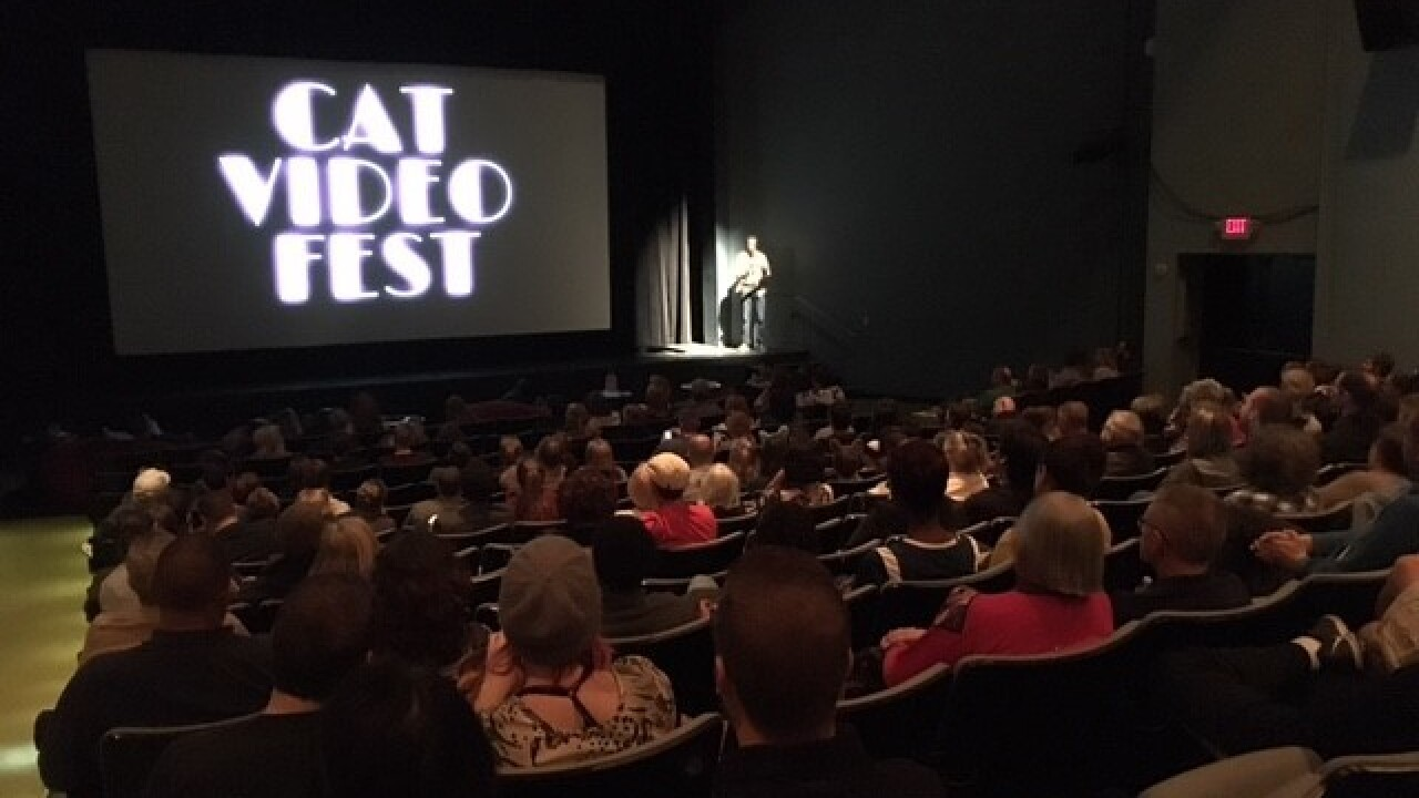 PHOTOS: Internet Cat Video Festival