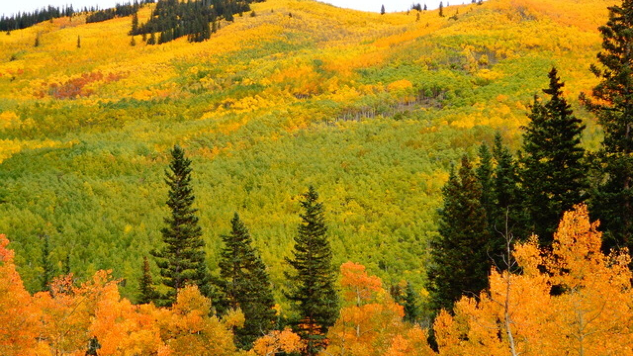 Leaves are starting to change color across Colorado; here's where and when to see them