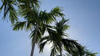 wptv-palm-trees-tourism.jpg
