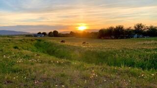 Sunset over the farm.jpg