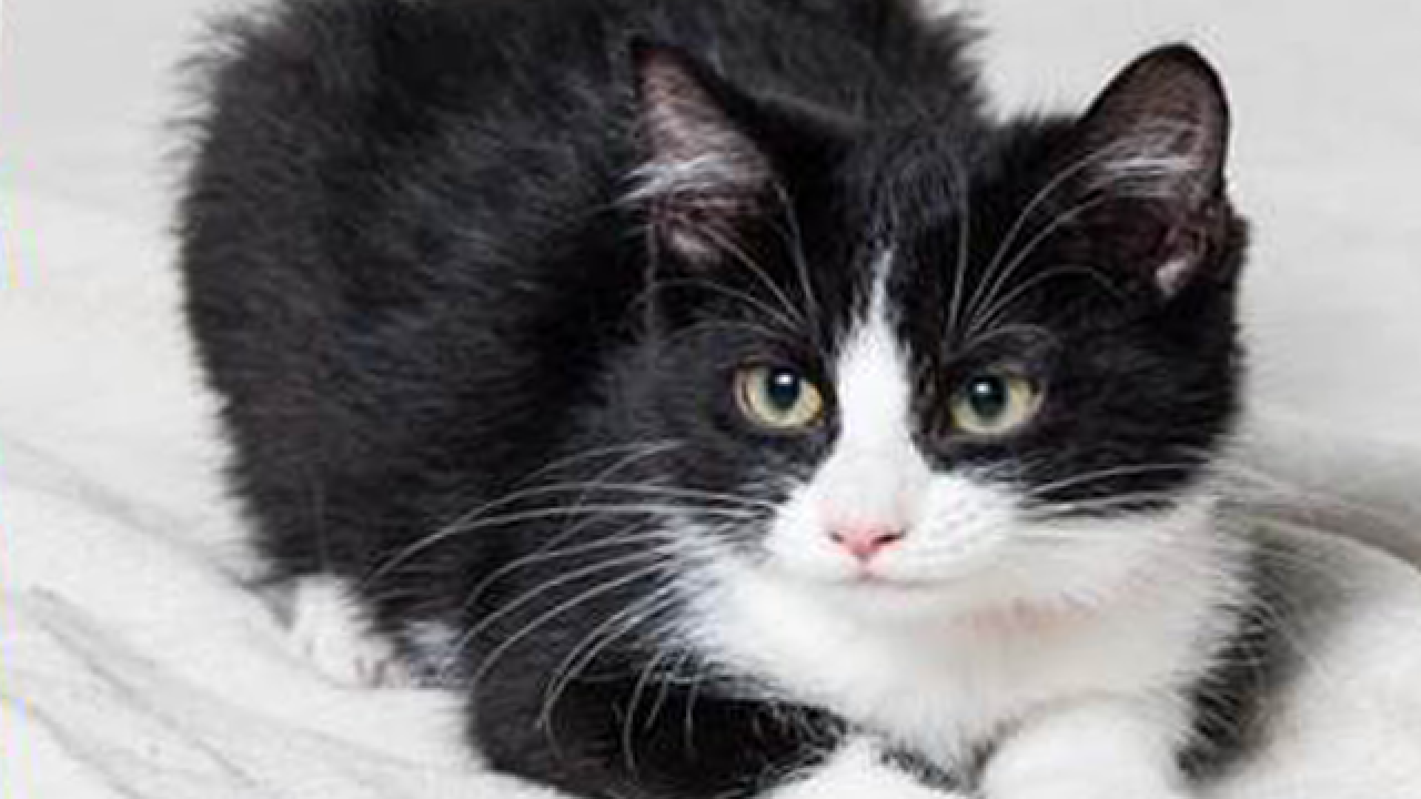 Clear the Shelters: Adoptable pets