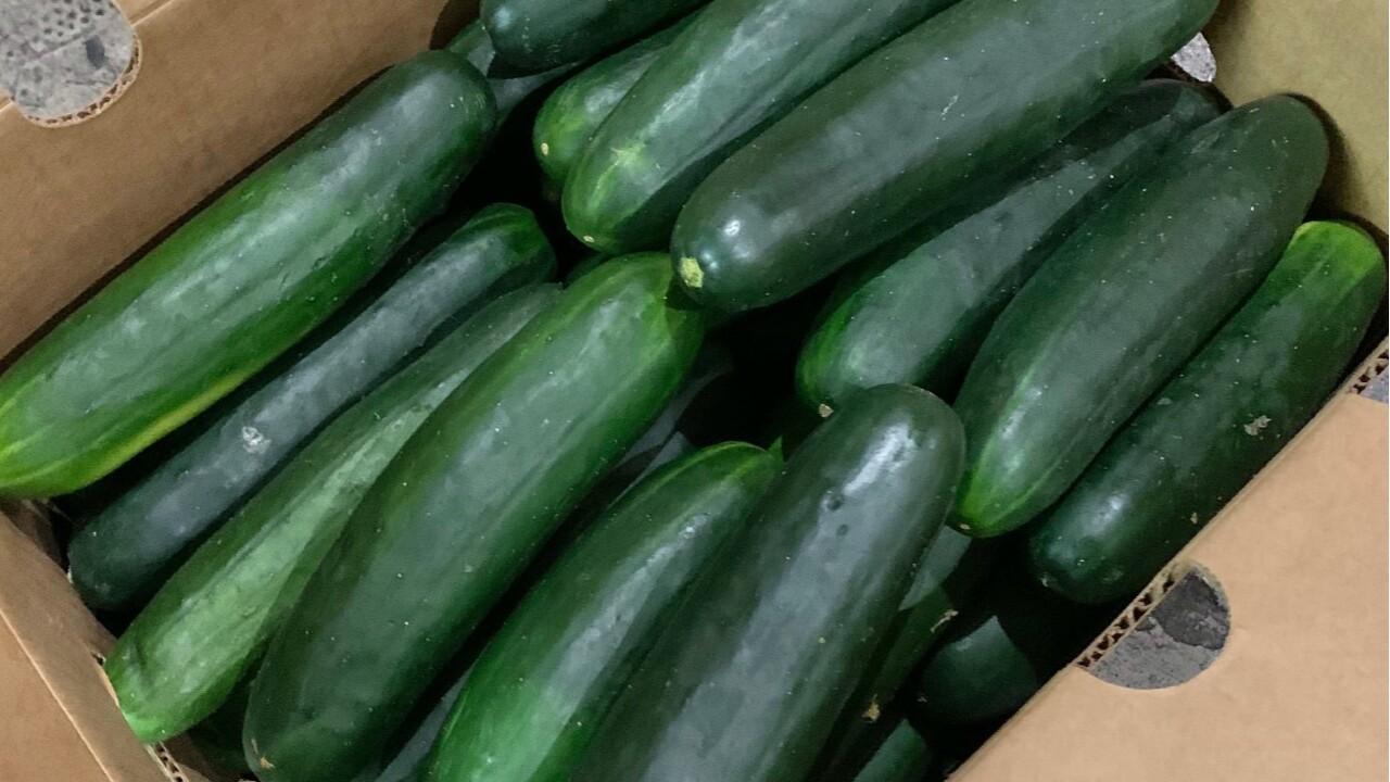 wptv-mecca-family-farms-cucumber.jpg