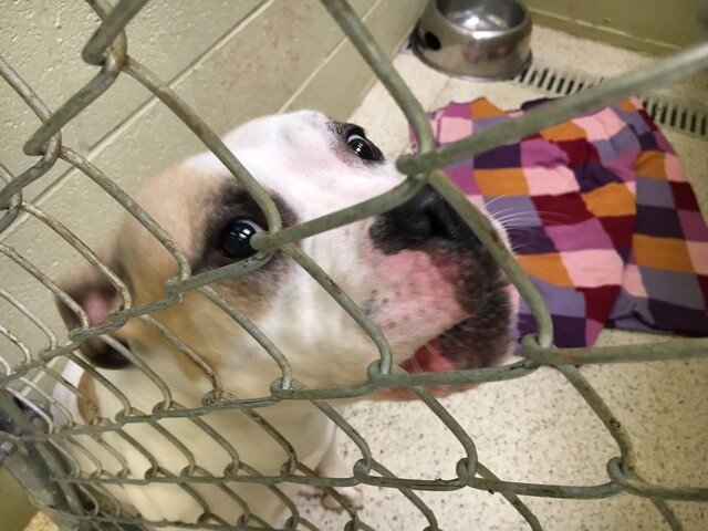 PHOTOS: Adopt love from Muncie this weekend for just $5