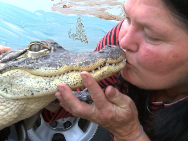 40 crazy gator photos from the last 2 years