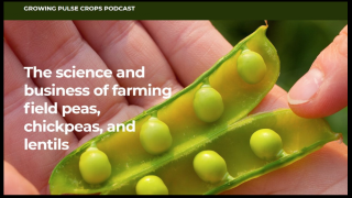 Montana Ag Network: New podcast focuses on growing pulse crops