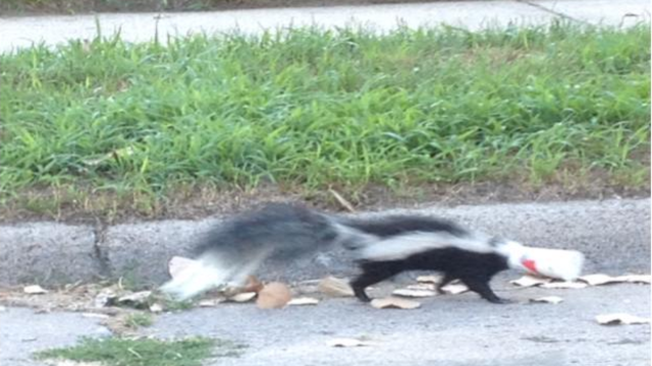 Michigan State Police troopers rescue skunk with cup on its head