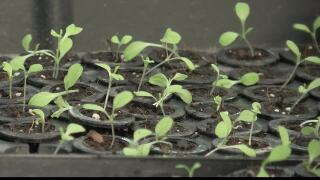 Frenchtown Elementary garden provides vegetables for schools cafeteria