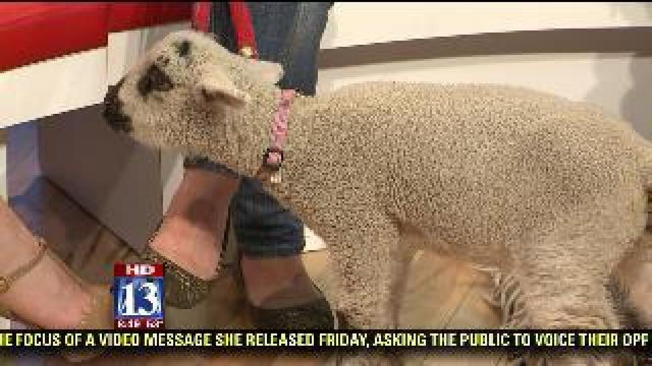 Britnee Nguyen on the Lamb and Wool Festival