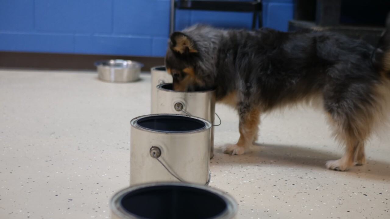 Medical Mutts in Indianapolis trains rescue dogs to become service animals