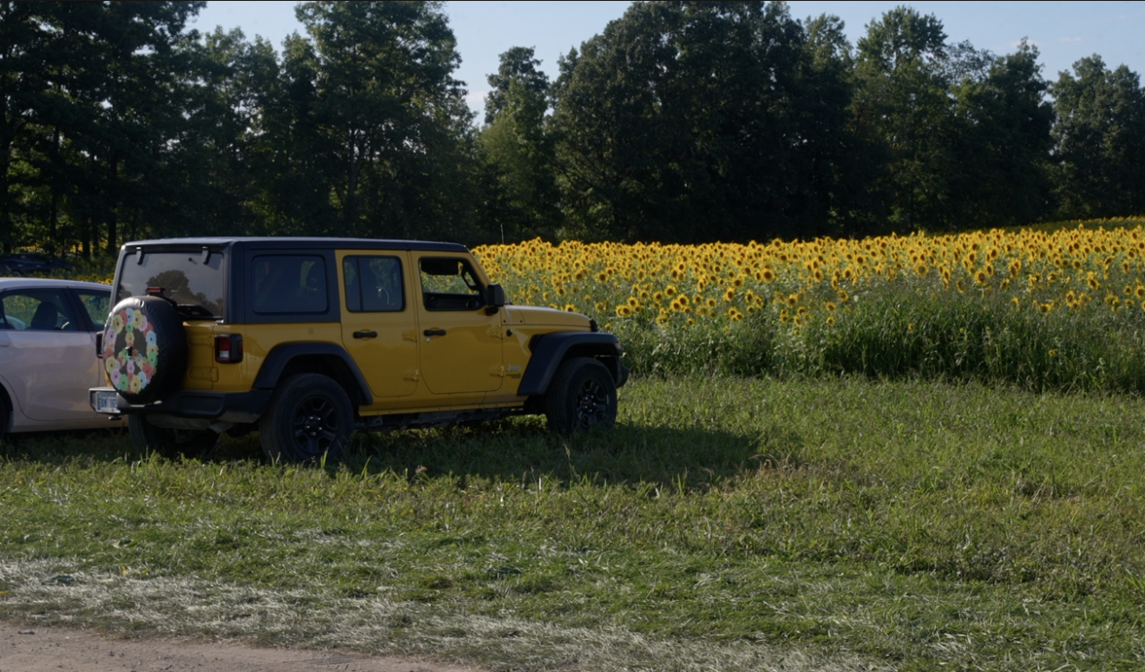 Yellow Jeep by a sunflower field