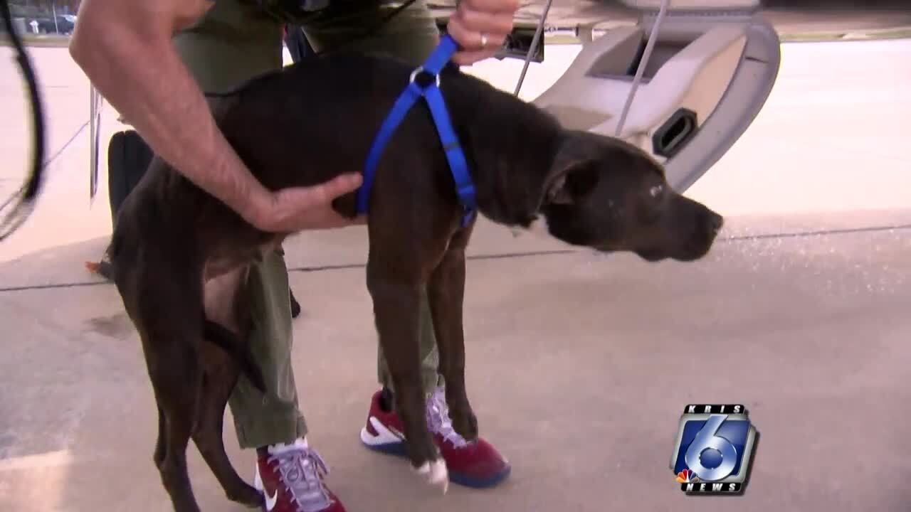 Pooches on the way to a rescue in Georgetown