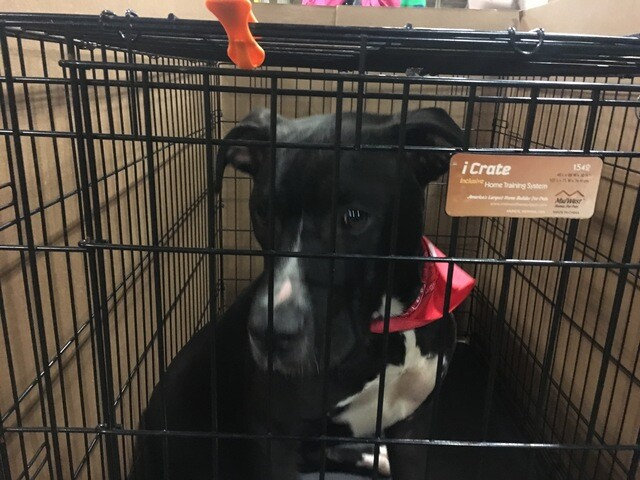 GALLERY: Indy Mega-adoption event 2018