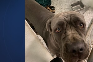 Dog at center of deadly dispute euthanized.