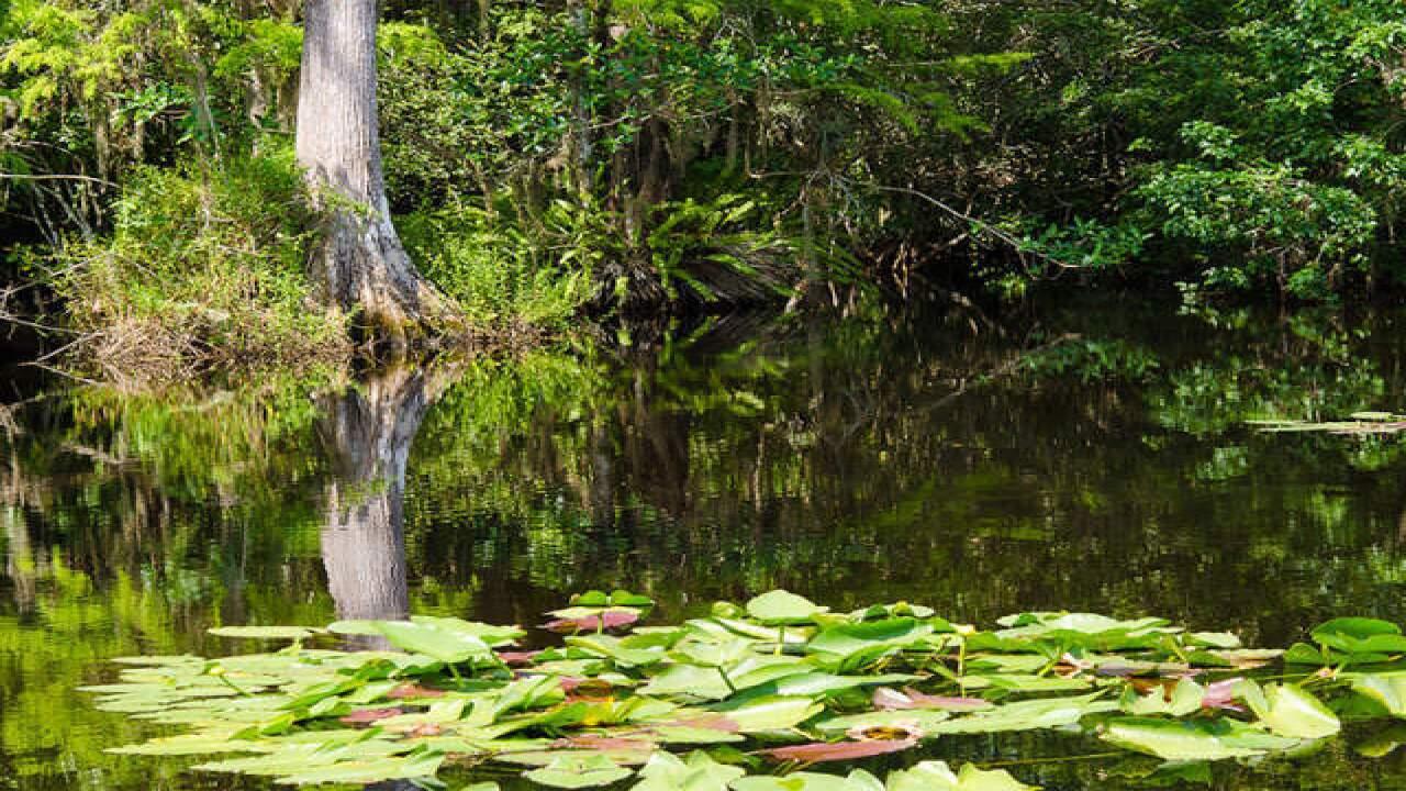 Everglades (file photo)